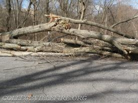 Tree on 6th Avenue